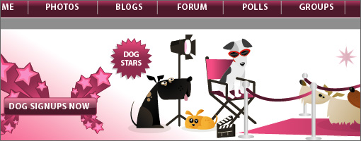 Hollywood Hounds Website Development - Small